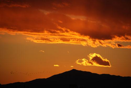 夕焼けに染まる野鳥